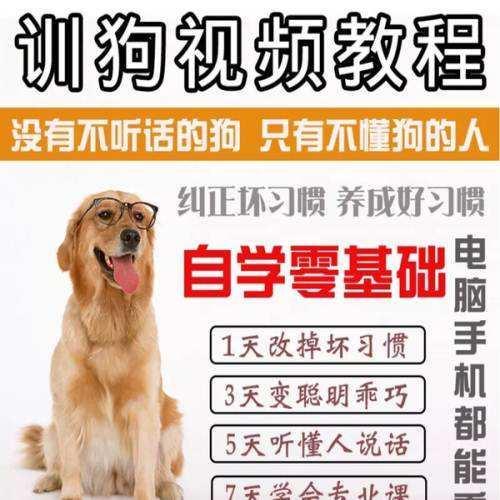 知名训狗教程视频 怎么样训狗的方法教程